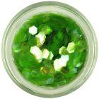 Elemente aqua, hexagoane - verde deschis