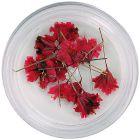Flori uscate roșii