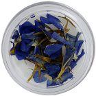 Flori uscate albastre-movii